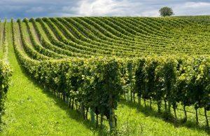 Il consumo di suolo ha spesso devastato le nostre campagne